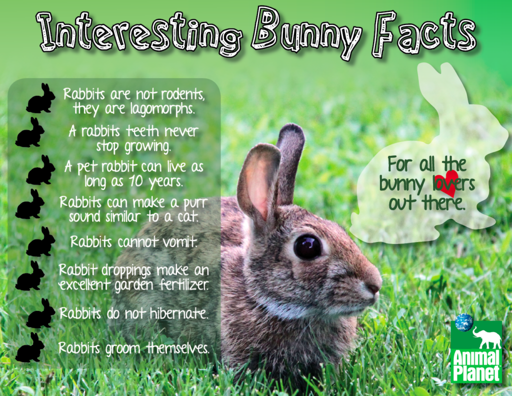 Interesting Bunny Facts